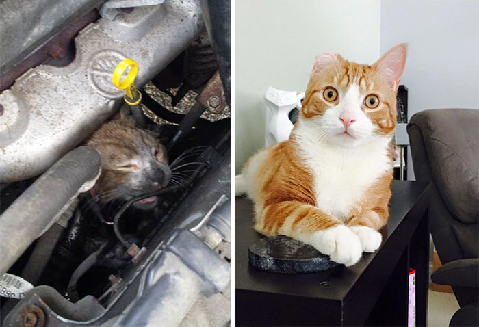rescue-cats-before-after-04