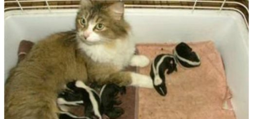 skunks-and-cats-feature