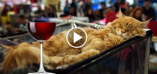 Featured-Cats-Always-Drunk-FB
