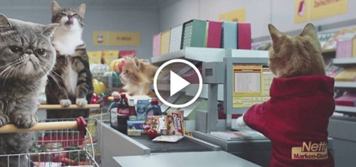 Featured-Cats-Grocery-Store-FB