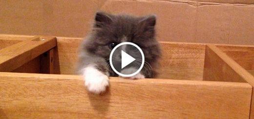 Featured-Cute-Escape-Routine-FB