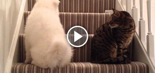 Featured-Dog-Befriends-Kitten-FB