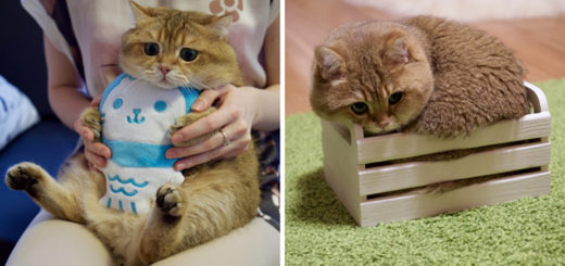 Featured-Hosico-Puss-In-Boots-FB
