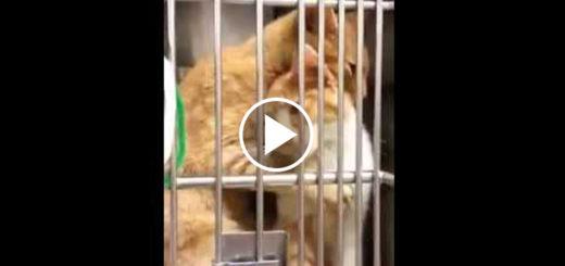 Featured-Kitten-Shelter-FB