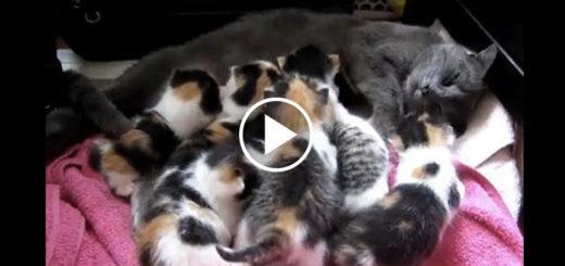 Featured-Rescue-Kitten-Nurses-FB