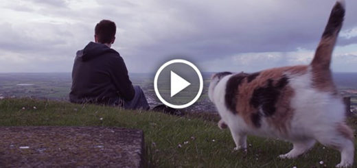 Featured-Stevie-Mountain-Cat-FB
