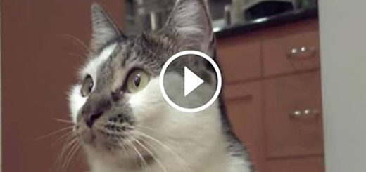 Featured-Talking-Cat-Says-I-Don't-Know