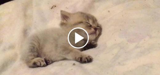 Featured-Teeny-Tiny-Kitten-FB
