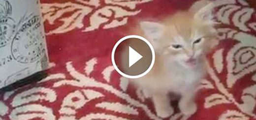 Featured-Tiny-Kitten-Orders-FB