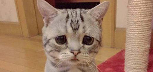 Featured-Worlds-Saddest-Cat-FB