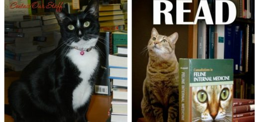 library-cats-feature