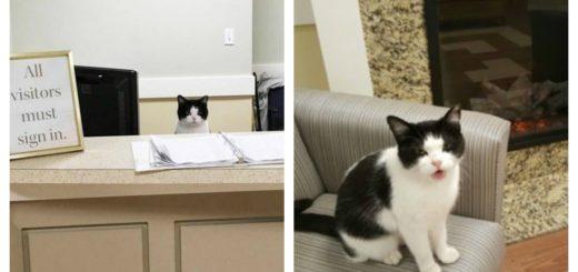 nursing-home-cat-feature