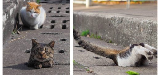 stray-cat-whack-mole-feature