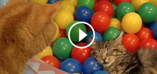 Featured-10-Cats-Pool-FB