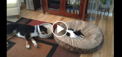 Featured-Cat-Bed-Stealing-FB