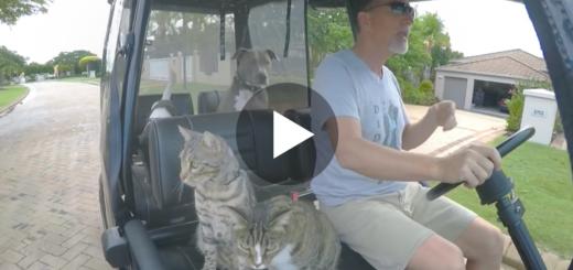 Featured-Cat-Golf-Cart-FB
