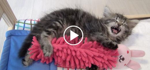 Featured-Cat-Hugging-Bunny-FB
