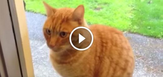 Featured-Cat-Rings-Doorbell-FB