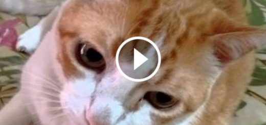 Featured-Cat-Sings-Along-FB