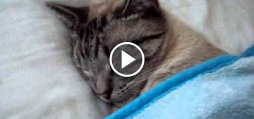 Featured-Cat-Sleeping-Boss-FB
