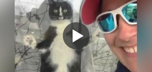Featured-Guard-Cat-FB