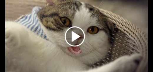 Featured-Hilarious-Commercial-Cat-FB