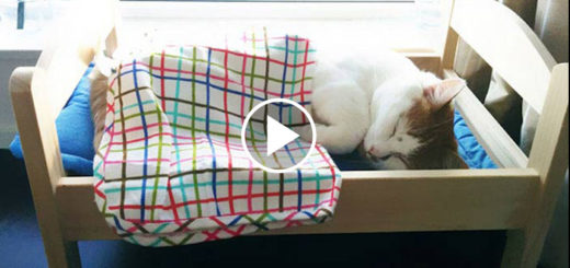 Featured-Ikea-Donates-Beds-To-Shelter-FB
