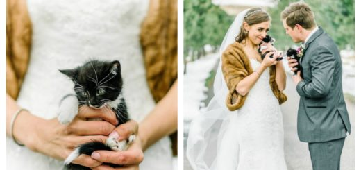 rescue-kitty-wedding-feature