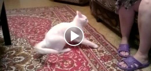 Featured-Cat-Attacks-Humans-FB