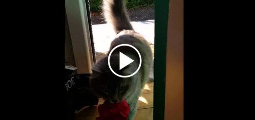 Featured-Cat-Brings-Flowers-FB