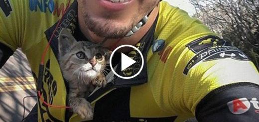 Featured-Cyclist-Kitten-FB