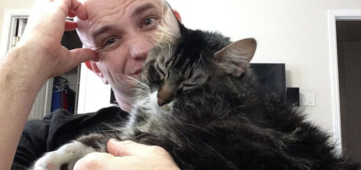 Featured-Hobbes-cat-FB