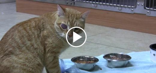Featured-Kitten-Surgery-FB
