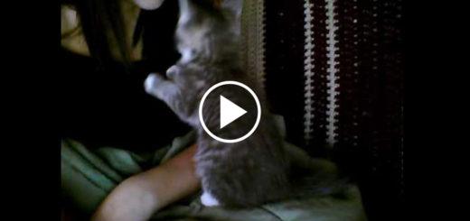 Featured-Kitty-Hugs-FB