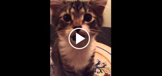Featured-Little-Kitty-Up-FB