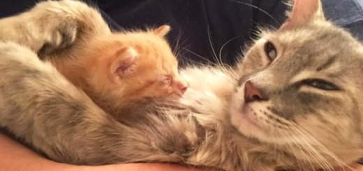 Featured-Momma-Cat-Saves-Orphans-FB