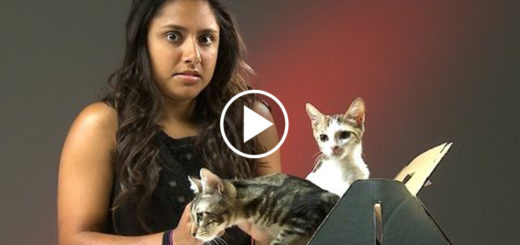 Featured-People-Who-Hate-Cats-FB