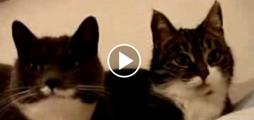 Featured-Talking-Cats-FB