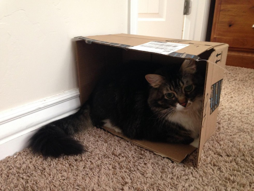 Hobbes-the-cat-6