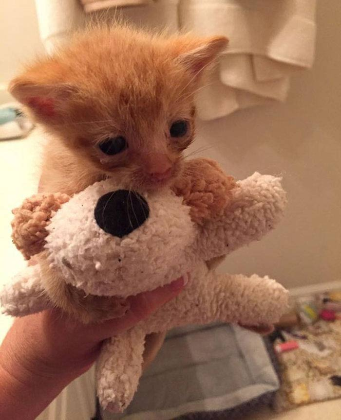 Momma-Cat-Saves-Orphans-1