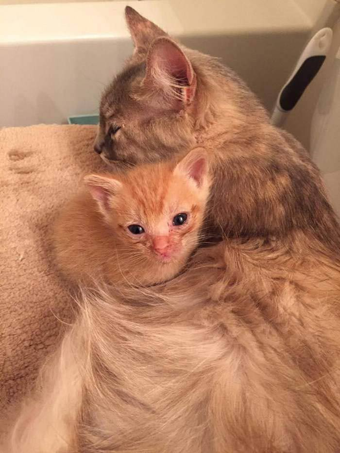 Momma-Cat-Saves-Orphans-2