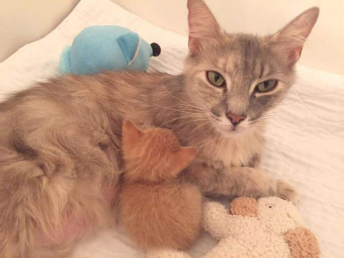 Momma-Cat-Saves-Orphans-4