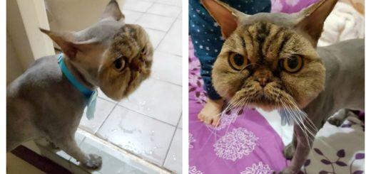 bad-cut-cat-feature
