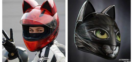 cat-helmet-feature