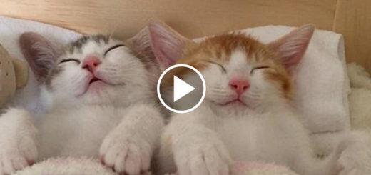 Featured-Best-Sleepover-FB