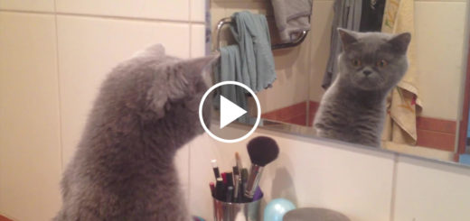 Featured-Cat-Admires-Himself-FB