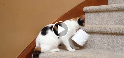 Featured-Cats-Stealing-FB