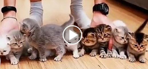 Featured-Kitten-Photo-FB