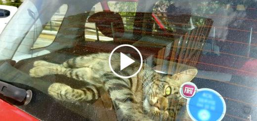 Featured-Leo-Cat-FB