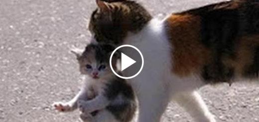 Featured-Mama-Cat-Kitten-FB